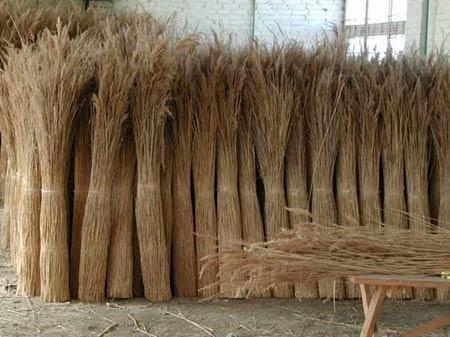 Камыш. Сырьё для плетения мебели и аксессуаров