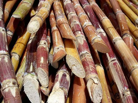 Тростник. Сырьё для плетения мебели и аксессуаров