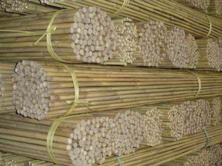Бамбук. Сырьё для плетения мебели и аксессуаров