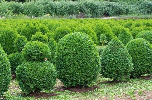 Как выбрать деревообрабатывающие многофункциональные.