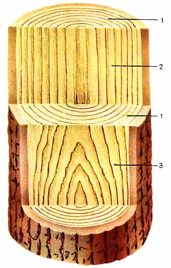 Макроскопическое композиция древесины