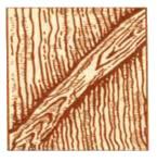 Пороки древесины. Пасынок