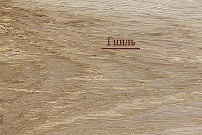 Пороки древесины. Гниль