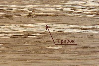 Пороки древесины. Грибок