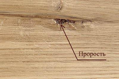 Пороки древесины. Прорость