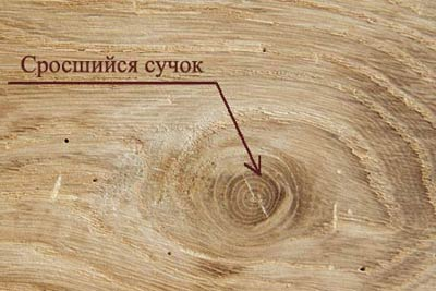 Пороки древесины. Сросшийся сучок