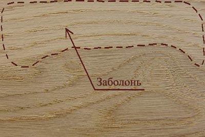 Пороки древесины. Заболонь